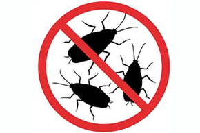 Cockroach Pest Control Chattanooga
